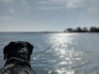 1615784558 beach   play   dog