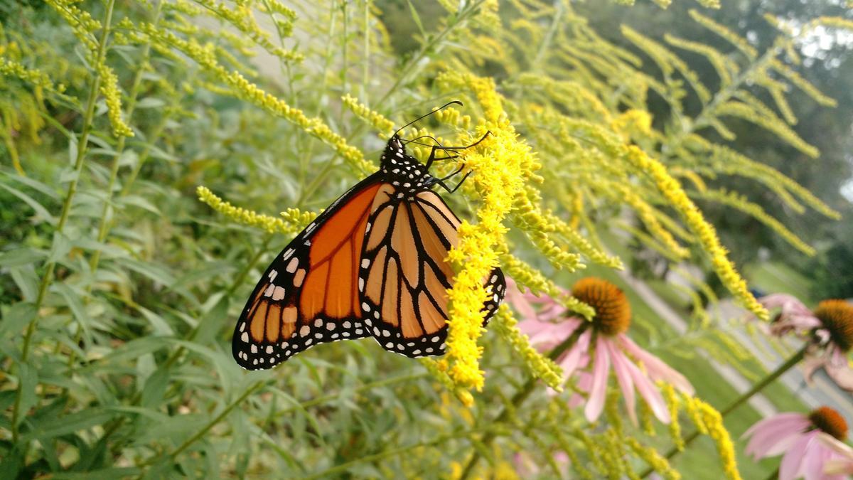 1569871225 26 butterfly in garden